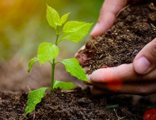 Proyecto de Ley de Agroecología y Producción Sustentable